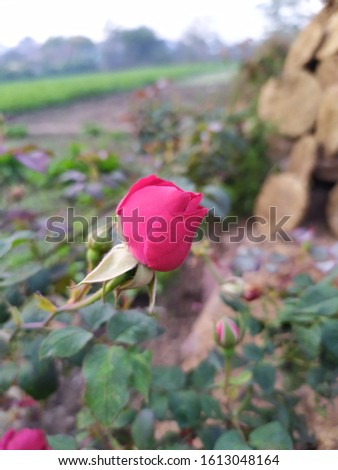 Flower & Plants natural pic