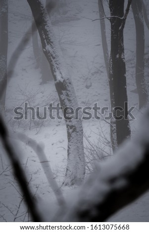Moody and foggy photo of a three during winter, full of snow. #1613075668