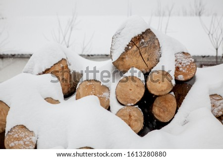 Felled trees under the snow. Raw materials for the woodworking industry. Wood storage in the open air. Timber company. Timber. Roundwood. Round timber. #1613280880