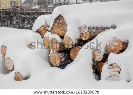 Felled trees under the snow. Raw materials for the woodworking industry. Wood storage in the open air. Timber company. Timber. Roundwood. Round timber. #1613280898