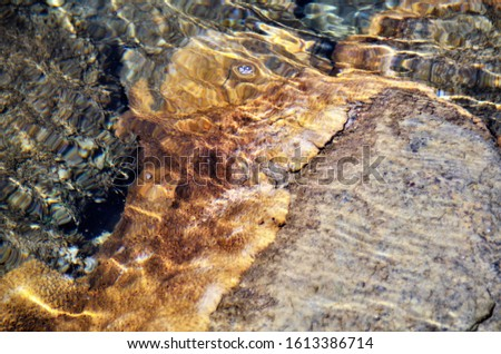 Beautiful coral formation in the water on the beach stones #1613386714
