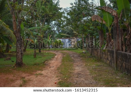 Dirt road leading to old house, with green trees and grass in Grange Hill, Jamaica - photo #1613452315