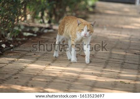 ANIMAL WILDLIFE LOVE ANIMAL ANIMAL BEAUTY #1613523697