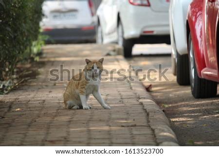 ANIMAL WILDLIFE LOVE ANIMAL ANIMAL BEAUTY #1613523700