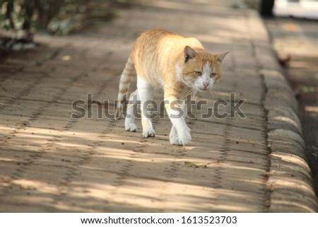 ANIMAL WILDLIFE LOVE ANIMAL ANIMAL BEAUTY #1613523703