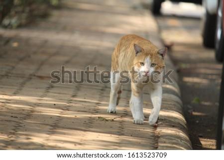 ANIMAL WILDLIFE LOVE ANIMAL ANIMAL BEAUTY #1613523709