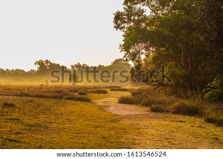 Natura View with lots of trees in forest, Sundarbans #1613546524