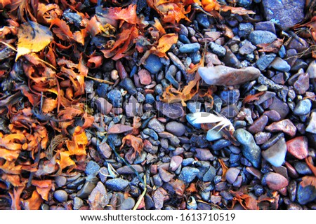 Colorful horizontal photo of seaweeds, pebbles and one single white feather. Rough beach ground shot from high angle. #1613710519
