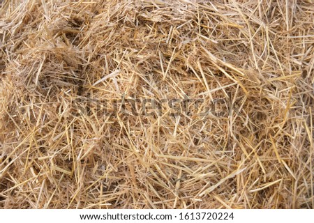Hay texture. Hay bales are stacked in large stacks. Harvesting in agriculture. #1613720224