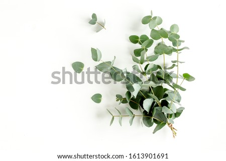 Bunch of eucalyptus on a white background. Royalty-Free Stock Photo #1613901691
