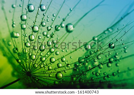 Abstract macro photo of dandelion seeds with water drops #161400743