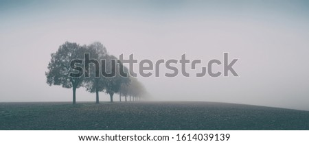 Desolate Autumn Landscape, Row of Trees in Thick Fog Royalty-Free Stock Photo #1614039139