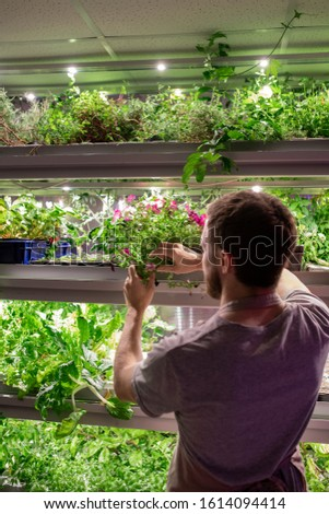 Rear view of young male farmer or selectionist in workwear taking one of growing plants on shelf during work in greenhouse #1614094414