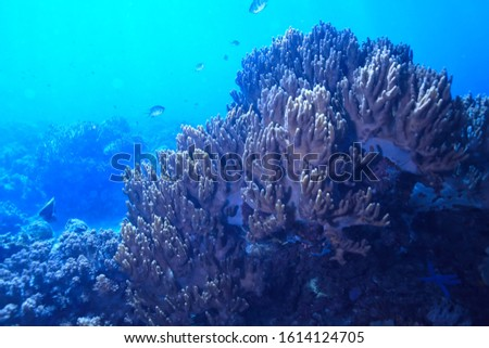 underwater world / blue sea wilderness, world ocean, amazing underwater #1614124705