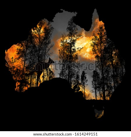 Australia fires: The animals struggling in the crisis. 480 million animals are being directly affected by Australia's bushfire crisis,. The extreme fires have ripped through natural habitats #1614249151