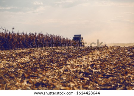 Picture of harvester in corn field harvesting in autumn. Husbandry concept. #1614428644