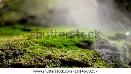 Beautiful green moss on the floor, moss closeup, macro. Beautiful background of moss for wallpaper. Royalty-Free Stock Photo #1614560257