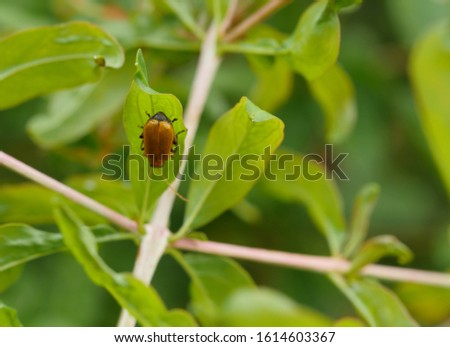 Small beetle perched on green leaf background #1614603367