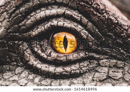 Closeup yellow eye of the dinosaurs with terrifying. Dinosaur hunters are staring with horrible yellow eye. Dinosaur eye. #1614618496