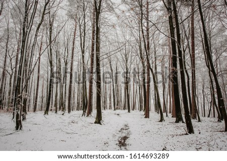 Winter snow forest landscape. Winter forest tree landscape. Snowy winter forest scene. Winter snow scene. #1614693289