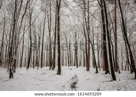 Winter snow forest landscape. Winter forest tree landscape. Snowy winter forest scene. Winter snow scene. #1614693289