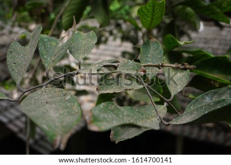 disease leaves. Diseases of the leaves due to pests and cracked #1614700141