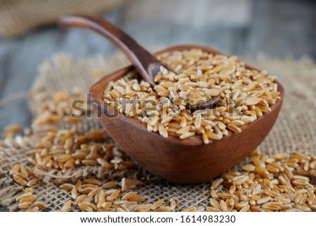 Khorasan wheat or kamut (Triticum turgidum) in wooden bowl #1614983230