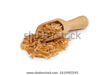 Khorasan wheat or kamut (Triticum turgidum) in wooden scoop isolated on white background #1614983245