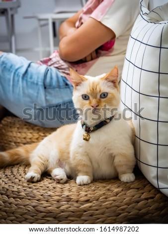 tiny cat and tiny leg #1614987202