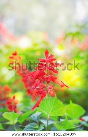 Branches of flowers, red, green leaves, against the backdrop of the bokeh for the backdrop. #1615204099