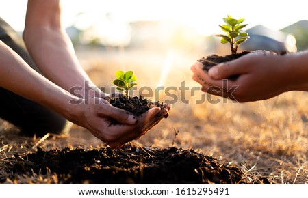 Two men are planting trees and watering them to help increase oxygen in the air and reduce global warming, Save world save life and Plant a tree concept. #1615295491