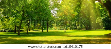 A cozy summer park with extensive lawns. Wide photo. Royalty-Free Stock Photo #1615410175