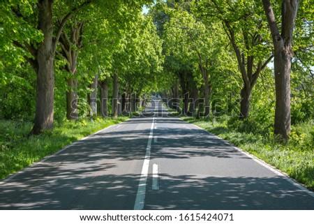 Avenue on Avenue-Street on the island of Rügen #1615424071