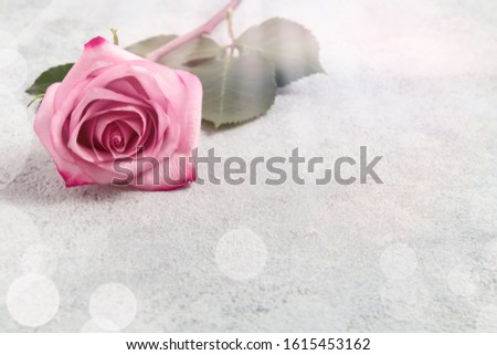 Pink roses on a concrete surface, template for design or greeting card, place for text, copy space