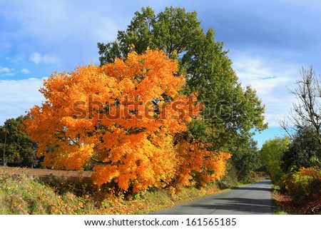 Colorful autumn Landscape with blue Sky #161565185