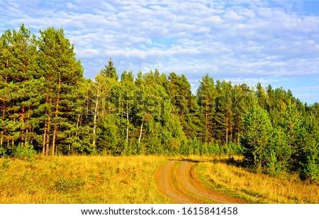 Road to pine tree forest. Forest road view. Forest road landscape #1615841458