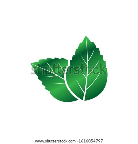 Mint. Icon set. Fresh mint leaves on white background,Mint green vector illustration. Mint logo vector,Mint leaves vector logo #1616054797