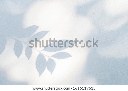 Leaves shadow and tree branch background.  Natural leaves tree branch dark shadow and light from sunlight dappled on white concrete wall texture for background wallpaper and any design #1616119615