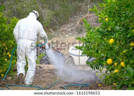 Farmer man spraying fumigating pesti, pest control. Weed insecticide fumigation. Organic ecological agriculture. Spray pesticides, pesticide on fruit lemon in growing agricultural plantation, Spain. #1616198653
