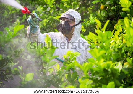 Farmer man spraying fumigating pesti, pest control. Weed insecticide fumigation. Organic ecological agriculture. Spray pesticides, pesticide on fruit lemon in growing agricultural plantation, Spain. #1616198656