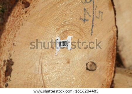 Tree logs are piled up, numbered, labeled and ready for transport #1616204485