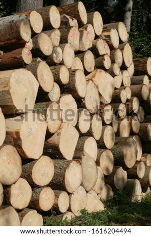 Tree logs are piled up, numbered, labeled and ready for transport #1616204494