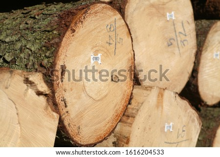 Tree logs are piled up, numbered, labeled and ready for transport #1616204533