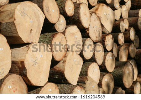 Tree logs are piled up, numbered, labeled and ready for transport #1616204569