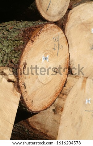 Tree logs are piled up, numbered, labeled and ready for transport #1616204578
