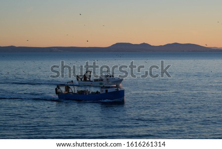 The fishing boats return to the port in the evening after a working day. Vessels or ships are sailing in the calm sea in the sunset light on the shore background. Seagulls accompany the schooners. #1616261314