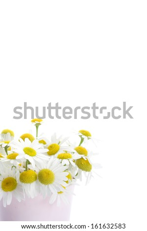 Flowers daisies isolated on white background #161632583