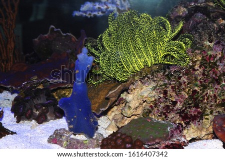 Crinoid on a coral reef #1616407342