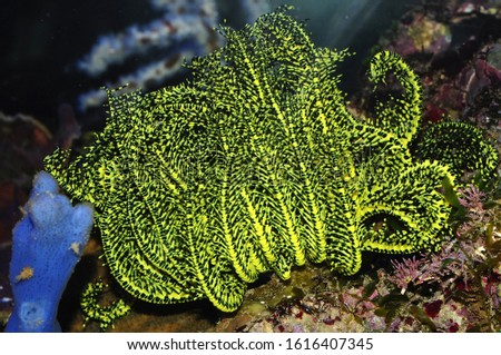 Crinoid on a coral reef #1616407345