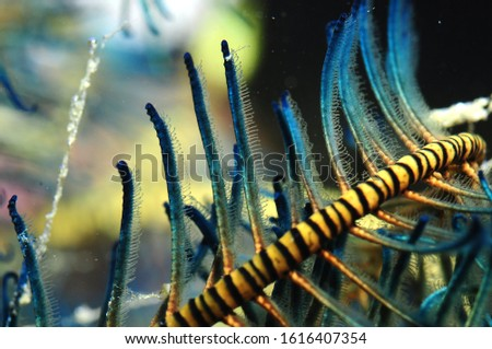 Crinoid on a coral reef #1616407354